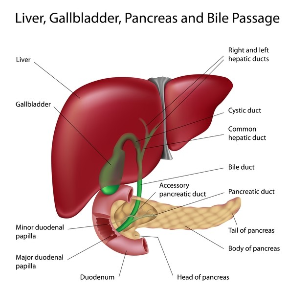 liver bile duct cancer